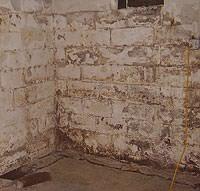 Peeling, Chipping, Basement Wall Coatings in [city]